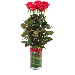 6 red roses online