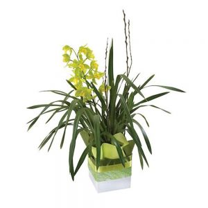 Wandin Florist Cymbidium Orchids Plant