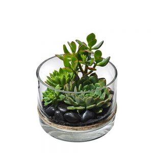 Wandin Florist NeeshSucculent Bowl
