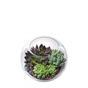 Wandin Florist Taya Succulent Bowl